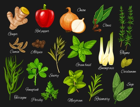 Spices and herbs vector icons of vegetable food seasonings and condiments. Red pepper, green basil and parsley, ginger root, onion and thyme branch, rosemary, cardamom seed and marjoram, cloves, sage