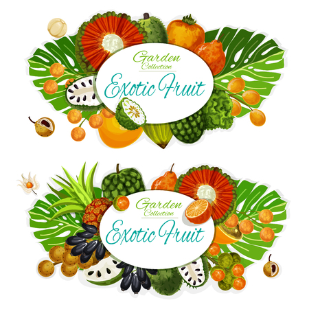Exotic fruits and berries with tropical palm leaves vector posters. Tangerine, cherimoya and physalis, soursop, pu hala and bergamot, pandan, persimmon and longkong branches. Food and drinks design Illustration