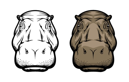 Hippopotamus wild African animal or hippo isolated icon. Vector hippopotamus realistic head muzzle, safari zoo or hunting trophy animal and sport club mascot sign