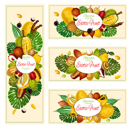 Exotic natural tropical fruits banners. Vector organic farm market jackfruit, jabuticaba or morinda, tamarind and akcee apple, tropical salak or pomelo citrus and pepino with quince pear and maruba