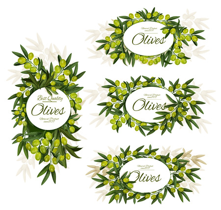 Green olives branches banners. Vector olive fruits with leaf, organic natural olive oil farm product or pickled marinated food package, premium quality vegetables