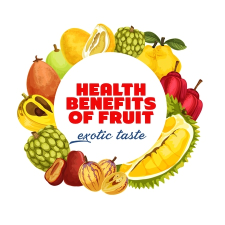 Exotic tropical fruits harvest of tropic durian, cherimoya or sweetsops and santol. Vector banner of organic farm ackee apple, pomelo citrus or quince pear and kumquat or ambarella fruits