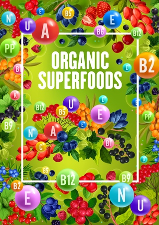 Superfood berries with natural organic vitamins and minerals. Vector healthy berry fruits, sea buckthorn or honeysuckle and cowberry or foxberry, viburnum and juniper berry