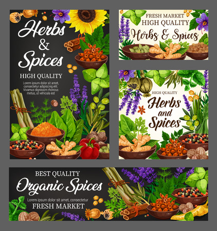 Spices, cooking flavoring herbs and herbal seasoning. Vector culinary condiments sunflower, lemongrass or turmeric and ginger, vanilla or cinnamon and natural garlic and anise with sage and olives Stock Vector - 123675804