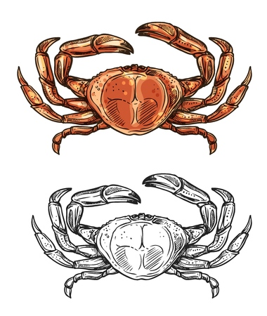 Crab seafood sketch icon. Vector isolated fishing crustacean, fishery sea food