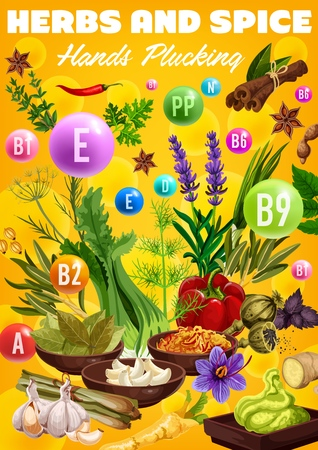 Spices, cooking flavoring herbs and herbal seasonings vitamins. Vector healthy multivitamin culinary condiments garlic, lemongrass or turmeric and ginger, vanilla or cinnamon, sage and chili pepper Illustration