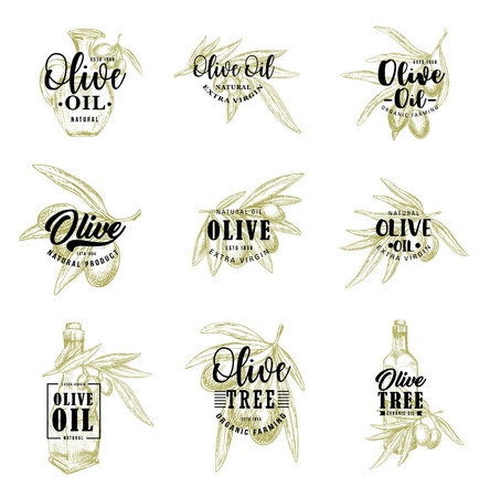 Olive sketch lettering, olive oil or pickled marinades package and natural framing product icons. Vector isolated symbols of olive branch, organic extra virgin oil in bottle or glass jar