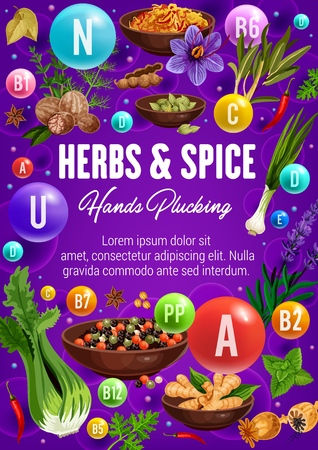 Herbal spices, cooking flavoring herbs and seasonings vector poster. Healthy multivitamin and vitamins complex in culinary condiments celery, onion leek and peppercorns, turmeric or sage and nutmeg Иллюстрация