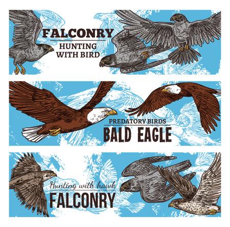 Caccia di falconeria con striscioni di schizzo di uccelli selvatici. Aquile vettoriali, falchi e avvoltoi predatori, falchi rapace e aquila calva che volano in cielo nella tradizionale caccia alla falconeria