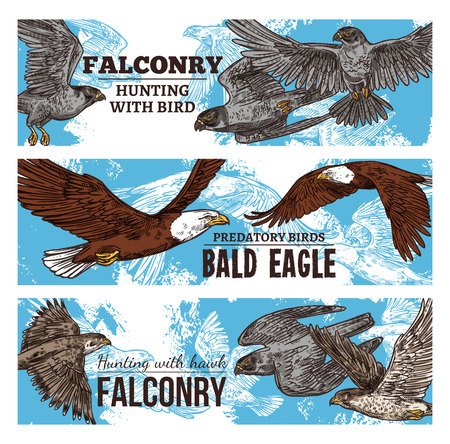 Falconry hunting with wild birds sketch banners. Vector eagles, falcons and predatory vultures, hawks bird of prey and bald eagle flying in sky in traditional falconry hunt