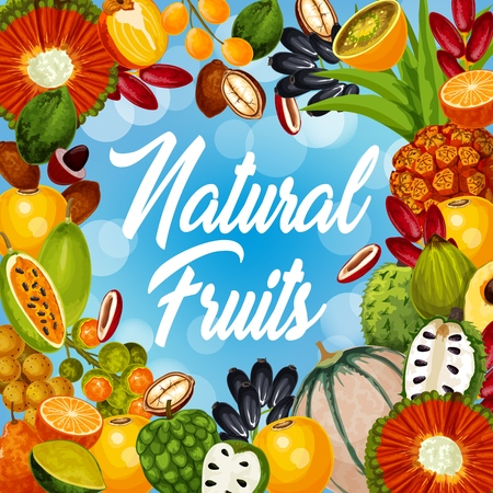 Exotic fruits harvest, natural tropical cantaloupe melon, persimmon or pandan and jambolan. Illustration