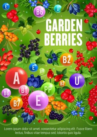 Bauernhofgartenbeeren schwarze Johannisbeere oder rote Johannisbeere und Hagebuttenfrüchte. Vektorgrafik