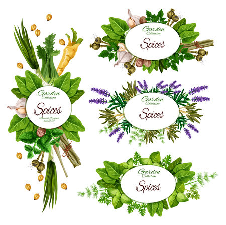 Farm herbs and garden organic spices, seasonings market posters. Archivio Fotografico - 123370337