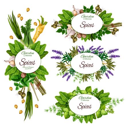 Farmkräuter und Bio-Gartengewürze, Gewürzmarktplakate.