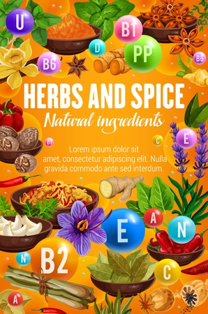 Cooking spices, seasonings and herbs, culinary natural ingredients. Illustration