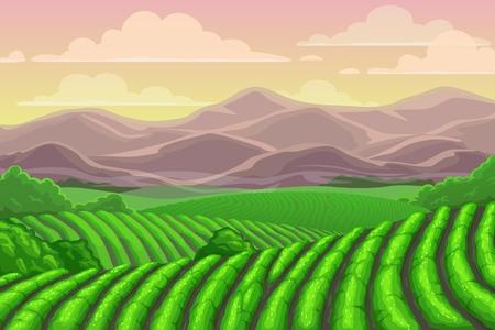 Teeplantagenfelder, Kaskadentallandschaft mit Berglandschaft. Vektorchinesische oder Sri Lanka-Wiesen mit Bergkulisse, terrassierte Landwirtschaft. Asiatischer Pflanzenanbau, ländliche Landschaft