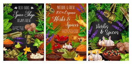 Cooking spices, seasonings and herbs farm shop posters. Vector organic garlic, pepper and basil, celery and savory herbs, spinach and arugula, herbal condiments and natural culinary ingredients