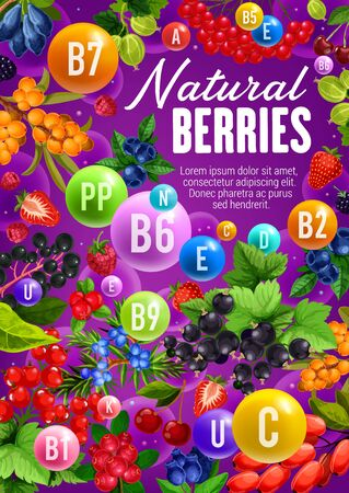 Berries with natural organic vitamins and minerals. Vector healthy berry fruits, sea buckthorn or honeysuckle and cowberry or foxberry, viburnum and juniper, super food rowanberry and cherry berries