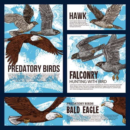 Falconry hunting sport, wild predatory birds hunt sketch posters. Vector eagles, falcons and predatory vultures on sky hunt, bird of prey hawk and bald eagle in traditional falconry hunting Ilustração