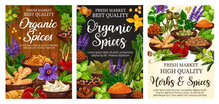Spices and green herbs vector poster of organic vegetable seasonings. Chilli pepper, vanilla and cinnamon, ginger, garlic and parsley, rosemary, thyme and anise, olives, basil and bay leaf condiments Illustration