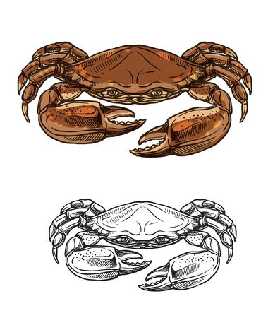 Crab sketch of vector sea animal and seafood. Red shellfish with brown claws and pincers. Marine invertebrate crustacean of fishing sport, fishery, underwater wildlife and fish restaurant design