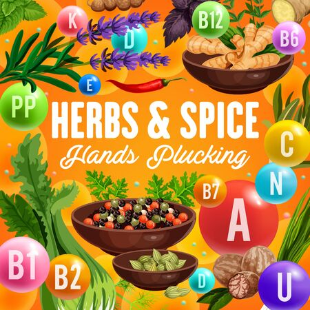 Green herbs and spices with vitamin and mineral, vector vegetable seasonings, healthy nutrition design. Pepper, ginger and basil, chilli pepper, nutmeg and parsley, bay leaves, cardamom and celery