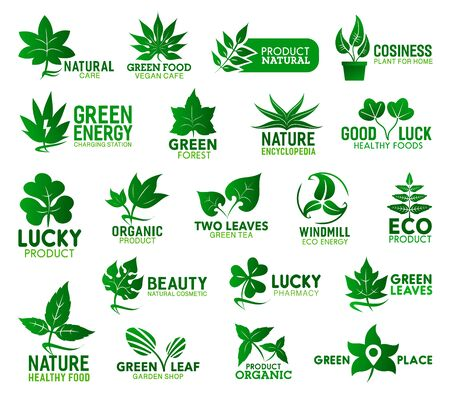 Green leaf vector icons of ecology, nature, health and organic products. Fresh leaves of eco and bio plants, tree branches and flower sprouts of birch, nettle and mint, clover, tropical palm and maple