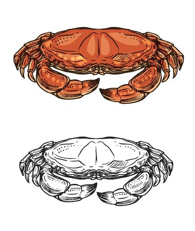 Crab sketch of seafood animal with red claws and shell. Vector sea shellfish or crustacean, ocean crawfish marine delicacy, fish market symbol or mediterranean cuisine restaurant menu Çizim
