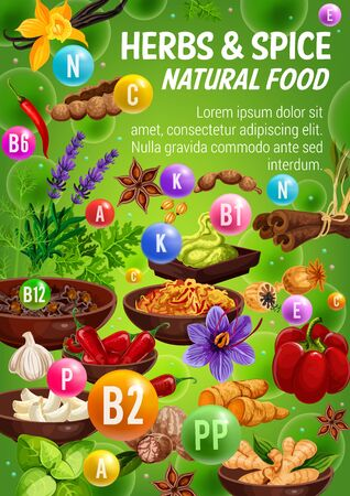 Spices and herbs, vitamins in natural food condiments and vegetable seasonings. Vector chilli pepper, basil and vanilla, cinnamon, ginger and garlic, star anise, parsley and nutmeg, saffron, turmeric Zdjęcie Seryjne - 128162105