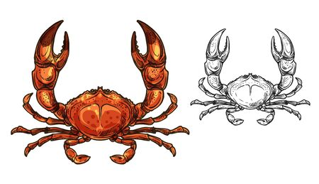 Crab sea animal sketch of seafood and marine crustacean vector design. Red shellfish, ocean crawfish or lobster with raised claws. Wild underwater animal, fishing and delicacy meal themes Illustration