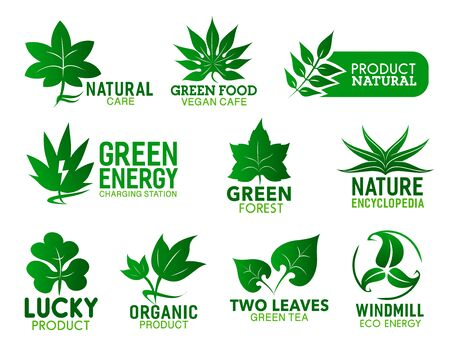 Green leaf icons of natural food product, eco energy and organic cafe vector design. Foliage of clover, aloe and mint plants, exotic palm, maple and oak trees with swirling lines and lightnings  イラスト・ベクター素材