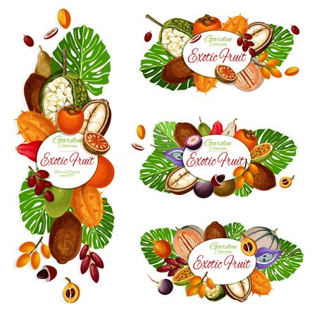 Exotic fruits and berries vector icons of tropical persimmon, cantaloupe and durian, marang, date and kiwano, cupuassu, granadilla and star apple, kuruba, jujube and chambakka. Vegetarian food design Ilustração