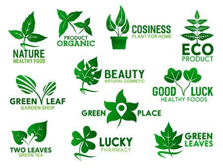 Foglia verde, ramo e pianta in icone vettoriali vaso. Simboli di identità aziendale di cibo sano, cosmetici naturali e prodotti ecologici, design di emblemi di negozi di giardinaggio e farmacia