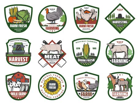 Milk, meat and vegetable farm retro badges with vector animals and crop plants, agriculture design. Barn, tractor on field and cow, chicken, turkey and fresh veggies, pig, sheep and sunflower