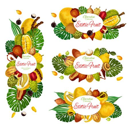 Exotic fruits and berries vector design of natural food and tropical palm leaves. Asian pomelo, jackfruit and tamarind, jabuticaba, santol and salak, ackee, quince and mulberry, kumquat and sapodilla Illustration