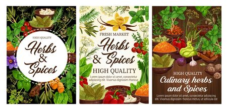 Herbs and spices vector design of fresh food condiments and vegetable seasonings. Vanilla, cinnamon and chilli pepper, rosemary, thyme and basil, ginger, parsley and nutmeg, garlic, saffron, turmeric