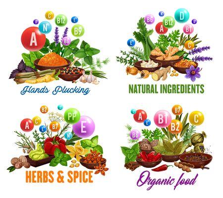 Spezie da cucina, condimenti naturali a base di erbe e ingredienti a base di erbe. Vitamine e minerali vettoriali in condimenti culinari biologici di aglio, pepe e basilico, sedano ed erbe aromatiche, spinaci e rucola