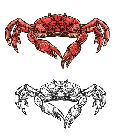 Crab seafood sketch isolated icon. Vector marine crustacean symbol of sea fishing or ocean fisher catch, fishery sea food underwater animal, zoology crab and salty snack Ilustração