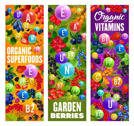 Berries organic superfood, healthy vitamins in garden berries. Vector super food diet nutrition, natural garden cherry, strawberry and raspberry, blueberry fruits and juniper, black and red currant