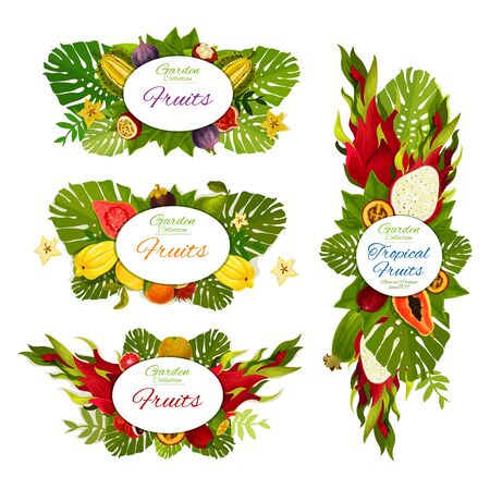 Tropical fruits harvest of durian, pitaya dragonfuit and organic papaya. Vector exotic fruits farm market banners of carambola starfruit, feijoa and tamarillo, guava and lichee Illustration