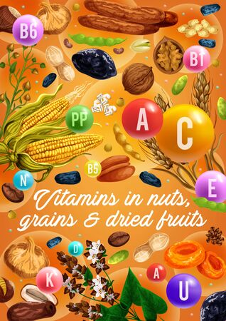 Nuts, organic cereals and dried fruits, healthy food vitamins. Vector superfood coconut, wheat and rye or buckwheat grain, dried apricot and prune with figs and coffee beans, hazelnut and peanut nuts