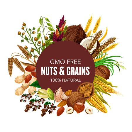 Nuts, organic cereals and healthy food grain. Vector GMO free superfood coconut, wheat and rye or buckwheat cereals, oatmeal with natural hazelnut, walnut and almond, corn and pistachio nuts
