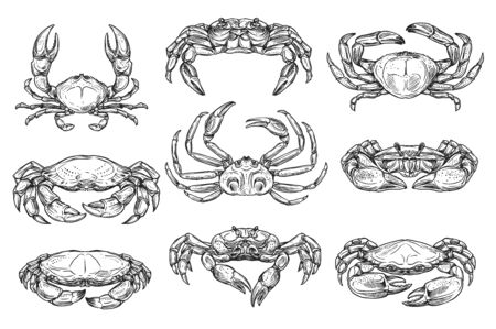 Underwater crab animal isolated sketches. Vector different crab with long claws, king and hairy crustacean, ocean lobster crayfish, wildlife marine and sea inhabitants, cancer
