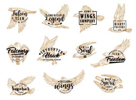 Oiseau faucon et aigle, icônes de croquis isolés. Symbole de club de chasse de vecteur, légende américaine, skyhunter de faucon de fauconnerie. Emblème avec faucon volant, symbole de liberté, âme sauvage, roi ailé du ciel