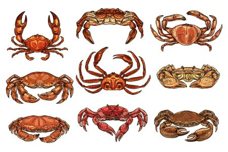 Crab and lobsters seafood isolated sketches. Vector marine crustacean hermit, hairy and king, opilio and spiny crabs. Underwater animal, zoology and lobster 스톡 콘텐츠 - 130018126