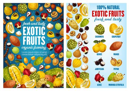 Tropical fruits, farm market or store. Vector natural cherimoya, grapefruit citrus or exotic quince pear and mango, jabuticaba or pepino, ackee apple with morinda citrifolia fruit Çizim