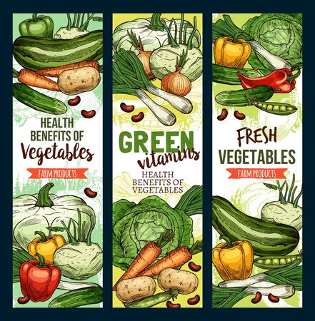 Vegetables, green vegetarian food vector sketch banners. Healthy vitamins in farm corn, carrot and vegan salads, celery, tomato and bell pepper, broccoli cabbage and garlic, zucchini and radish