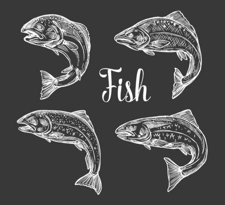 Croquis monochromes de poisson truite et saumon sur tableau noir. Poissons d'eau douce et d'eau salée de vecteur, symboles de la pêche et du sport de pêche