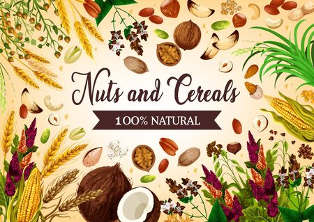 Nut, bean and cereal natural food. Vector coconut, hazelnut and walnut, corns and ears of wheat. Barley and sunflower seeds, pistachio and almond, rice and buckwheat. Beans and peanuts, raw grains Иллюстрация