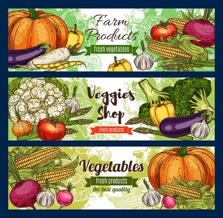 Vegetables, farm veggies and green organic vegetarian food. Vector sketch of healthy corn, carrot and vegan salads, celery, tomato or broccoli cabbage and garlic, pumpkin and eggplant